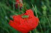 Insekten mögen Blühstreifen