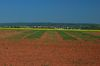 Ernte von Kurzumtriebsplantagen, Foto: Peter Gaß