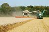 Getreideernte. Foto: Peter Gaß