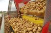 Die Kartoffel stellt als Frucht mit intensivem Erdkontakt vielfältige Leistungsanforderungen. Foto: Peter Gaß