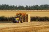 Die energetische Verwertung von Stroh wird zunehmend diskutiert. Foto: Peter Gaß