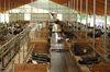Bei der Planung von Milchviehställen rücken gesamtbetriebliche Fragestellungen in den Vordergrund. Foto: Peter Gaß