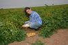 Mit erntefrischen Kartoffeln und Susann Schulze gewinnt Peter Gaß einen Fotowettbewerb. Foto: Peter Gaß