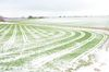 Wenn der Schnee leise rieselt. Foto: Peter Gaß