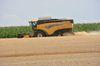 Auf 75% des Ackerlandes wachsen Weizen, Mais, Gerste oder Raps. Foto: Peter Gaß
