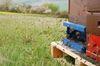 Kommt das Patent auf die Honigbiene? Foto: Peter Gaß