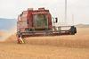 Getreideernte im Donnersbergkreis.  Foto: Peter Gaß