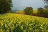 Landwirtschaft im Jahreskreis. Foto: Peter Gaß
