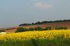 Rheinland-Pfalz setzt auf Biomasse