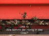 lws13: Wie kommt der Honig in das Glas?