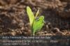 002-0002-s06-03-mais-einzelpflanze-gut.jpg