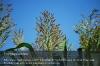 s07-06-kws-freya-sorghum-bicolor-sudanense-bluete-gut.jpg