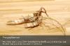 s19-05-miscanthus-wurzel-frei-gut.jpg
