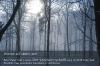 s01-16-dob-im-schnee-hin-nebel-im-wald-gut.jpg