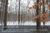s05-01-winterwald-gut.jpg