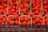 s01-02-erdbeeren-voll-gut.jpg