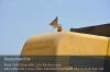 s07-04-nhcs540-erbsen-rit-seite-deutschlandflagge-gut.jpg