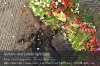 s01-02-pflanzenabfaelle-erde-gut.jpg