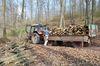Günter holt Brennholz im Wald.