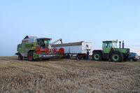 Weizenernte mit CLAAS DOMINATOR, Foto: Peter Gaß, www.Der-Landwirt-schafft.de