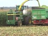 LWS 37, Wie wird Mais geerntet? 1. Ernten
